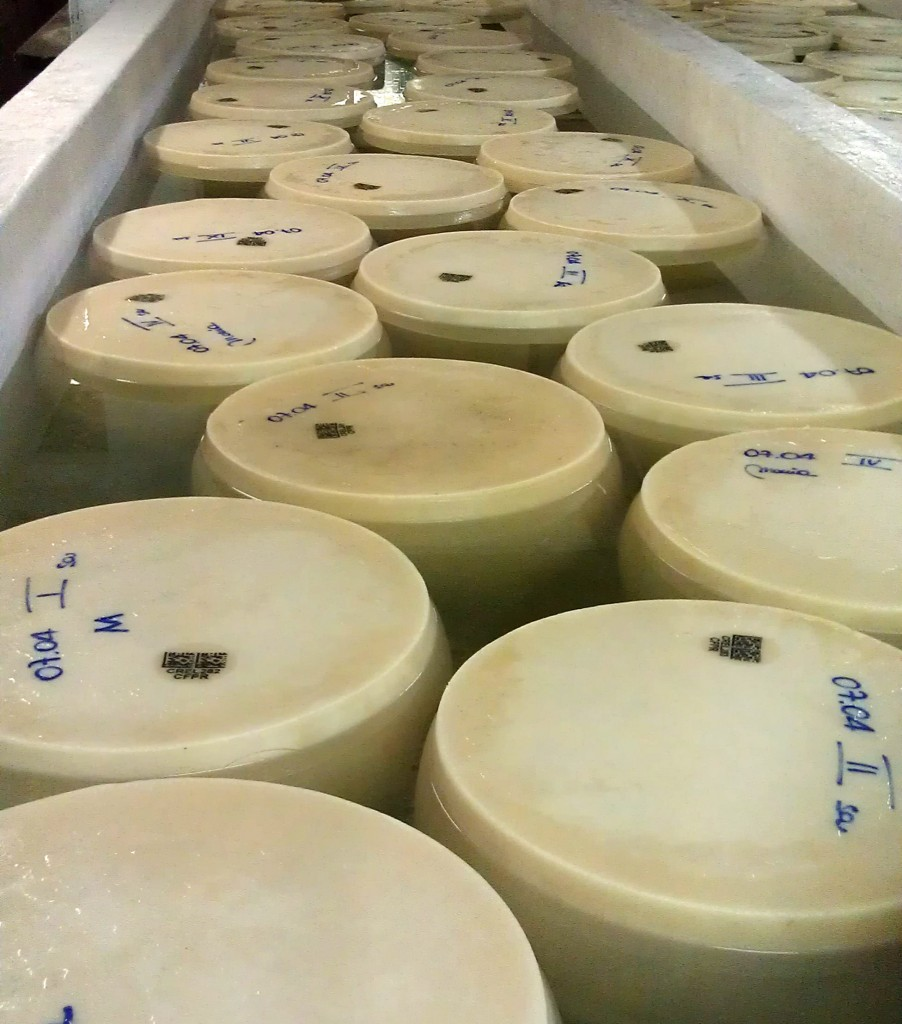 Parmigiano Reggiano wheels curing in a salt bath