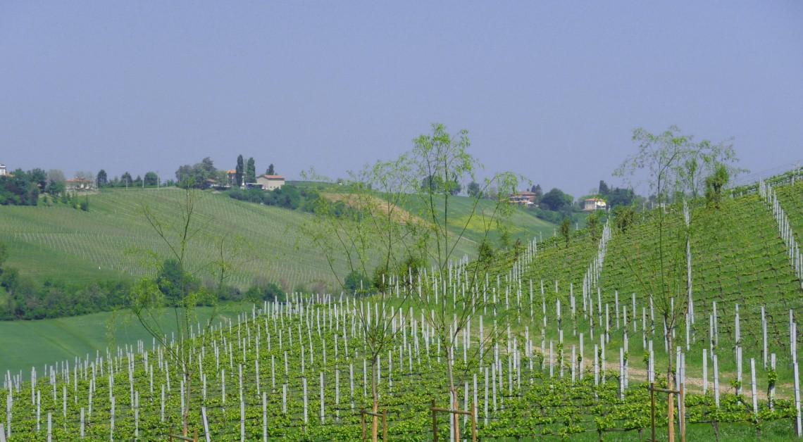 Vineyard Lunch Italian Days Food Tour