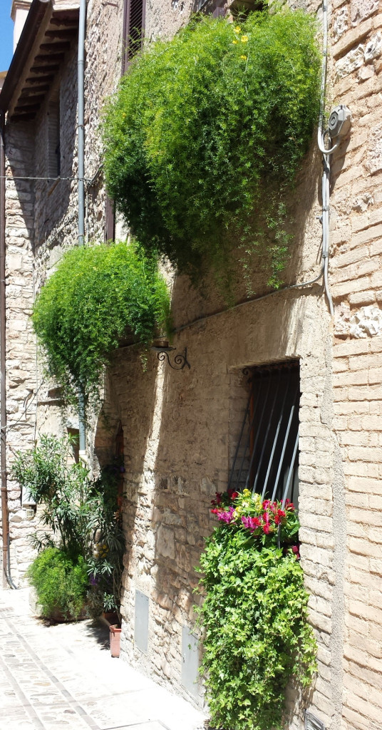 Spello walls home to plants